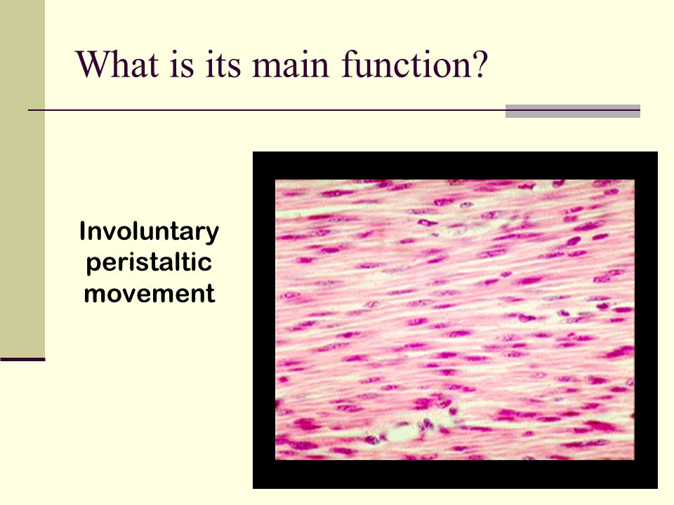 What is its main function