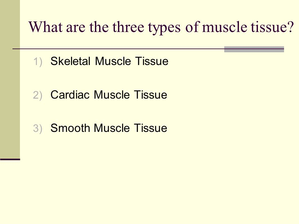 What are the three types of muscle tissue