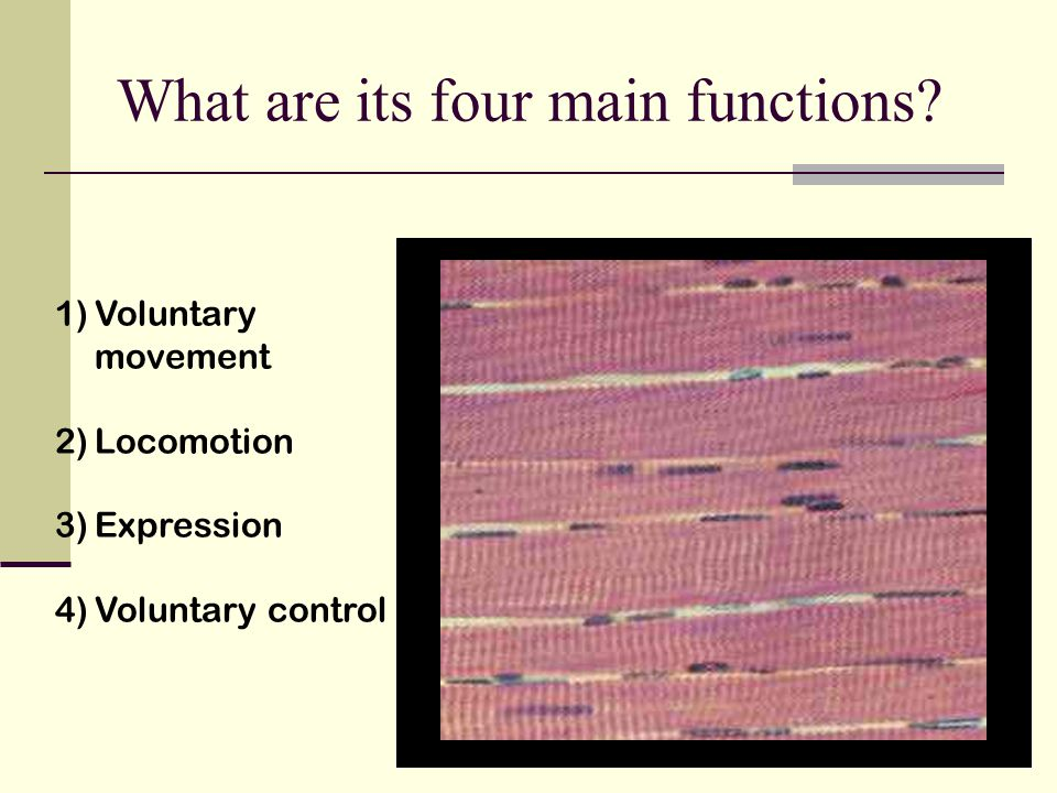 What are its four main functions