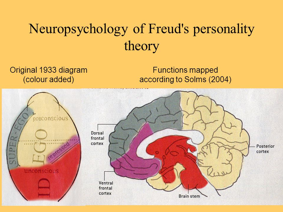 Neuropsychology of Freud s personality theory