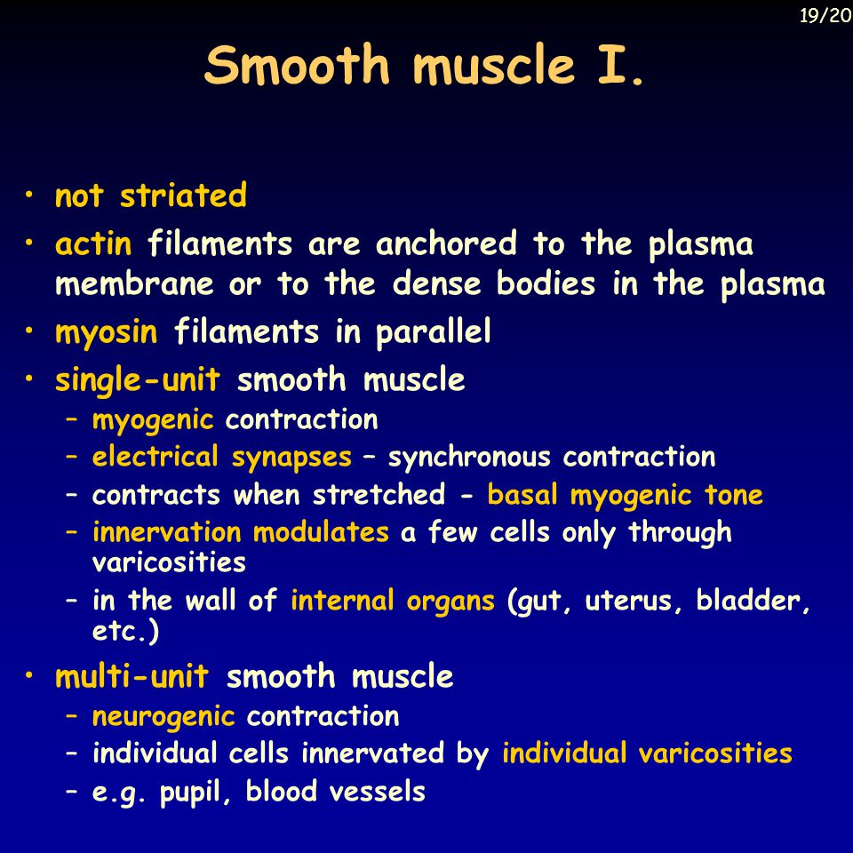 Smooth muscle I. not striated