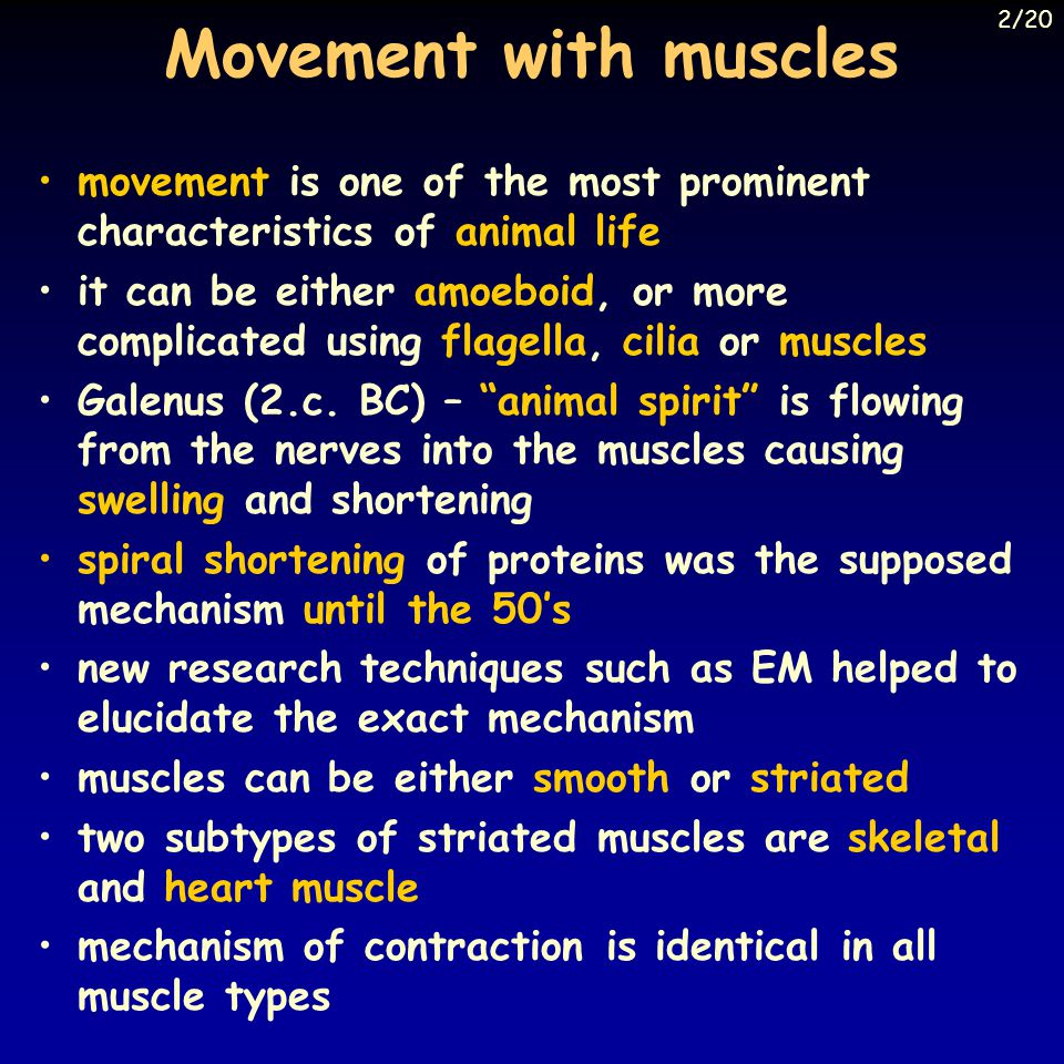 Movement with muscles 2/20. movement is one of the most prominent characteristics of animal life.