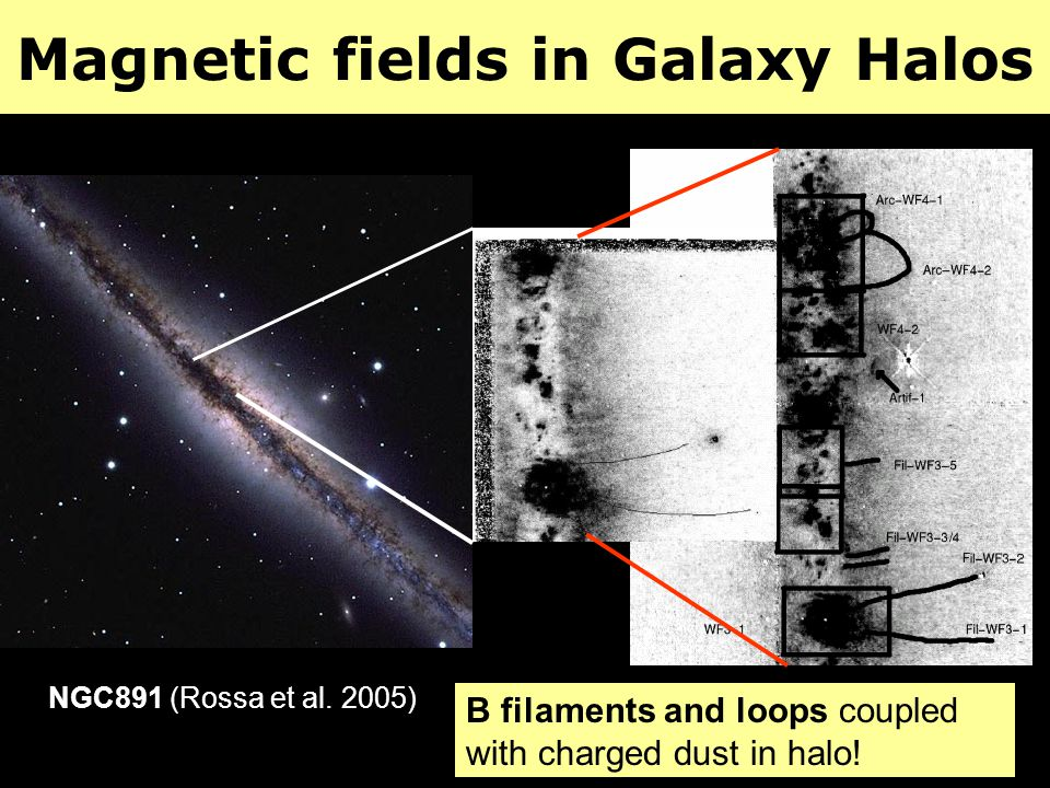 Magnetic fields in Galaxy Halos