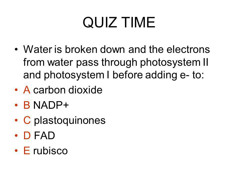 QUIZ TIME Water is broken down and the electrons from water pass through photosystem II and photosystem I before adding e- to: