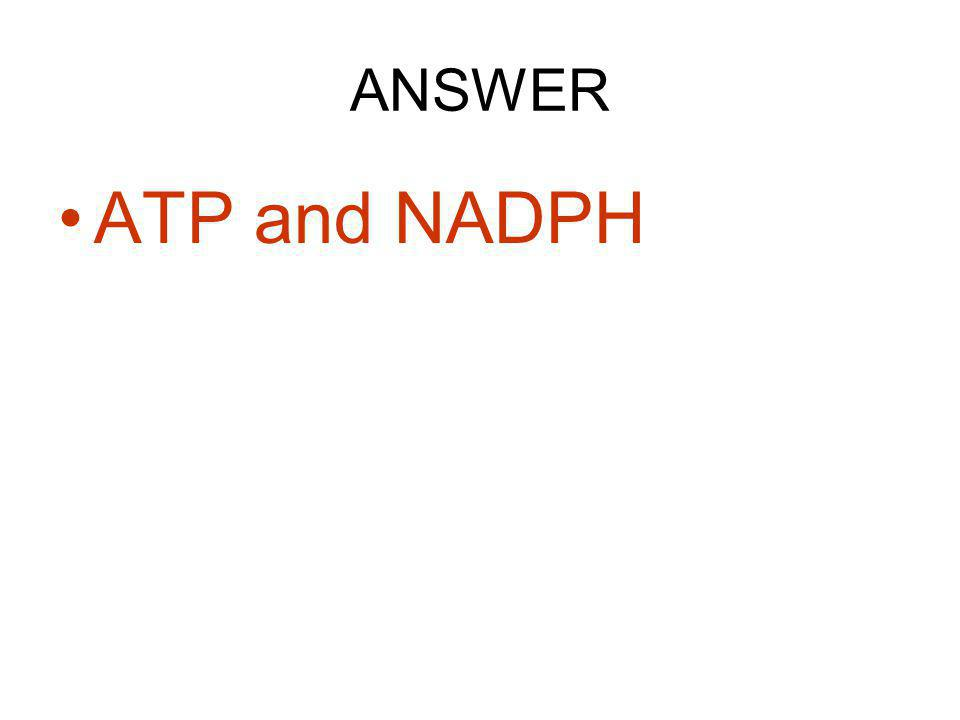ANSWER ATP and NADPH