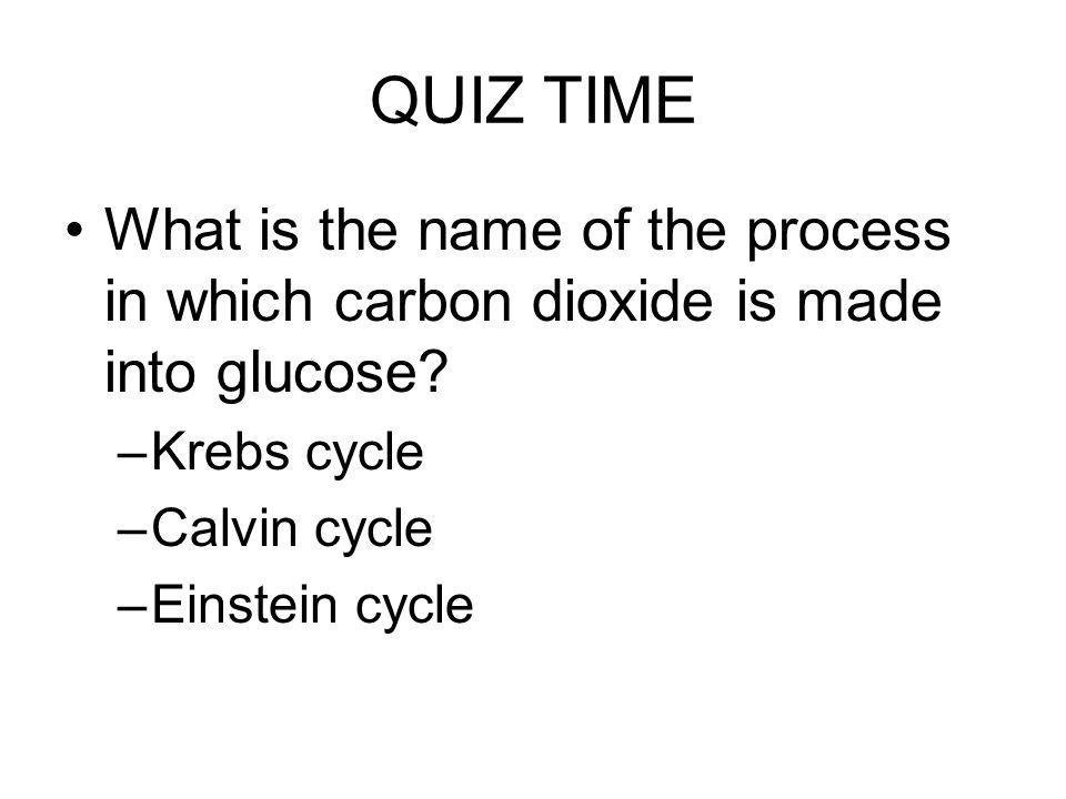 QUIZ TIME What is the name of the process in which carbon dioxide is made into glucose Krebs cycle.