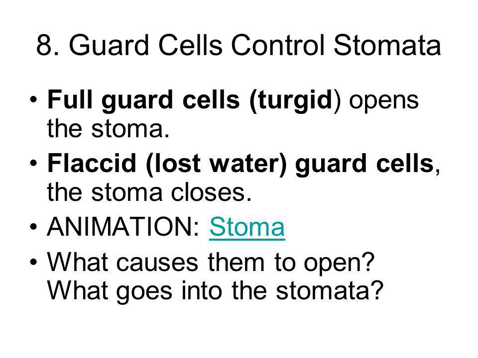 8. Guard Cells Control Stomata