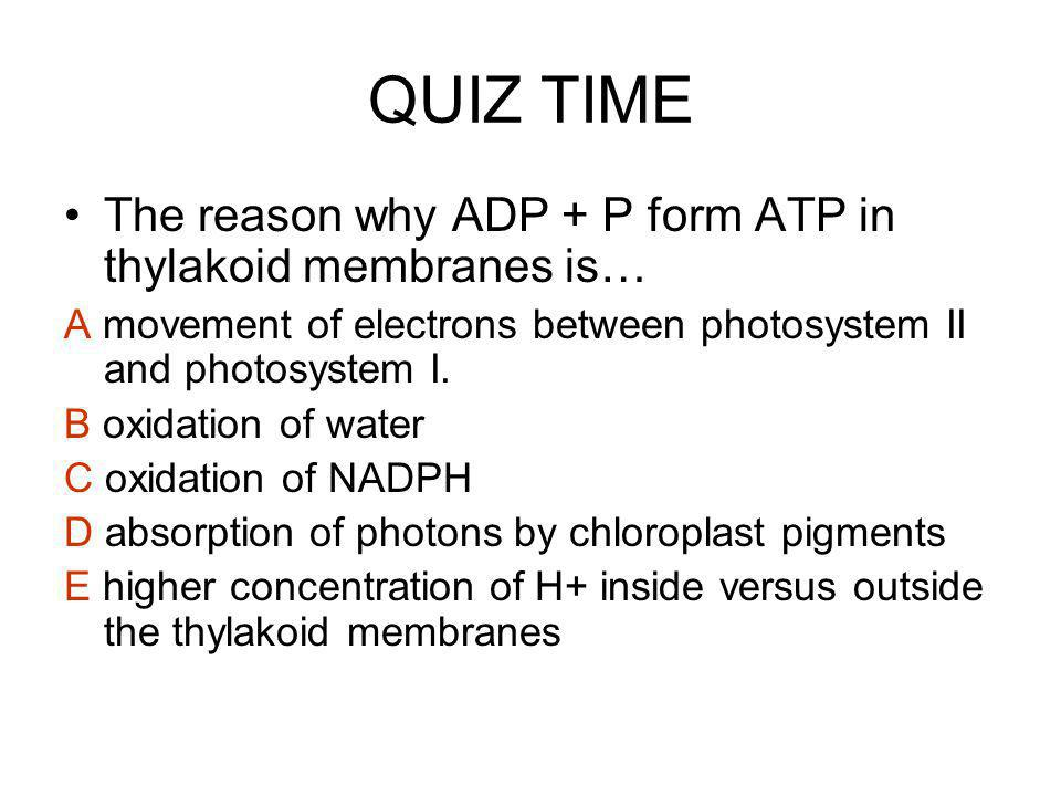 QUIZ TIME The reason why ADP + P form ATP in thylakoid membranes is…