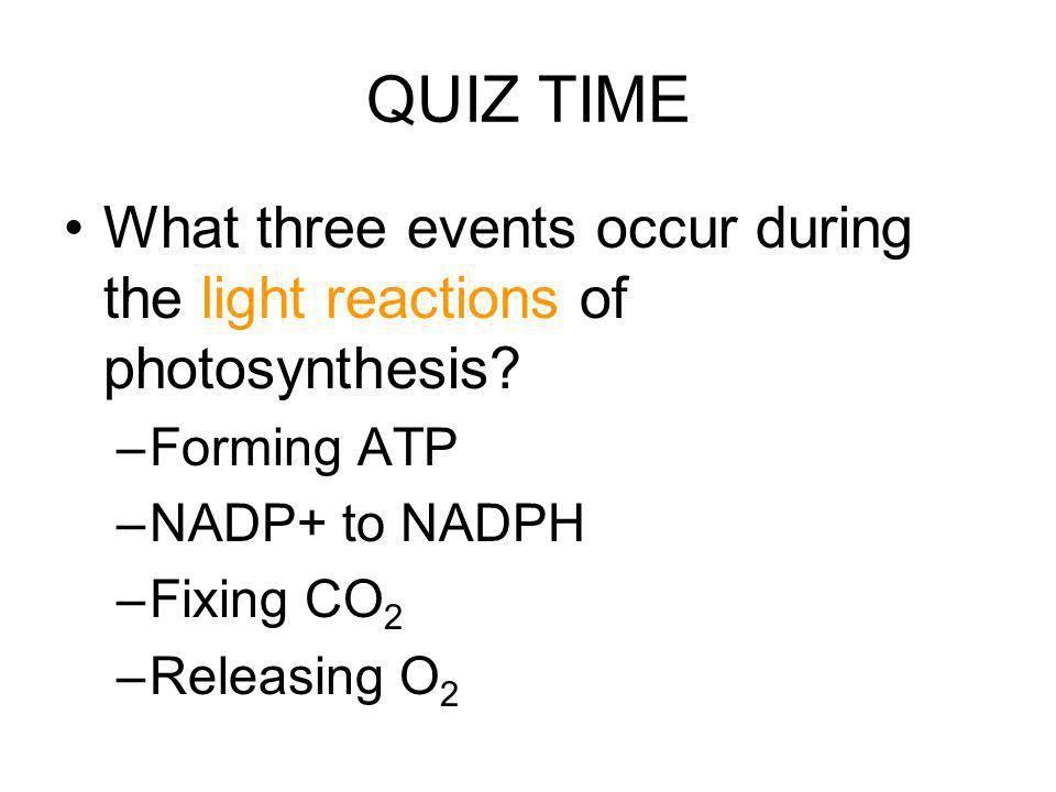 QUIZ TIME What three events occur during the light reactions of photosynthesis Forming ATP. NADP+ to NADPH.