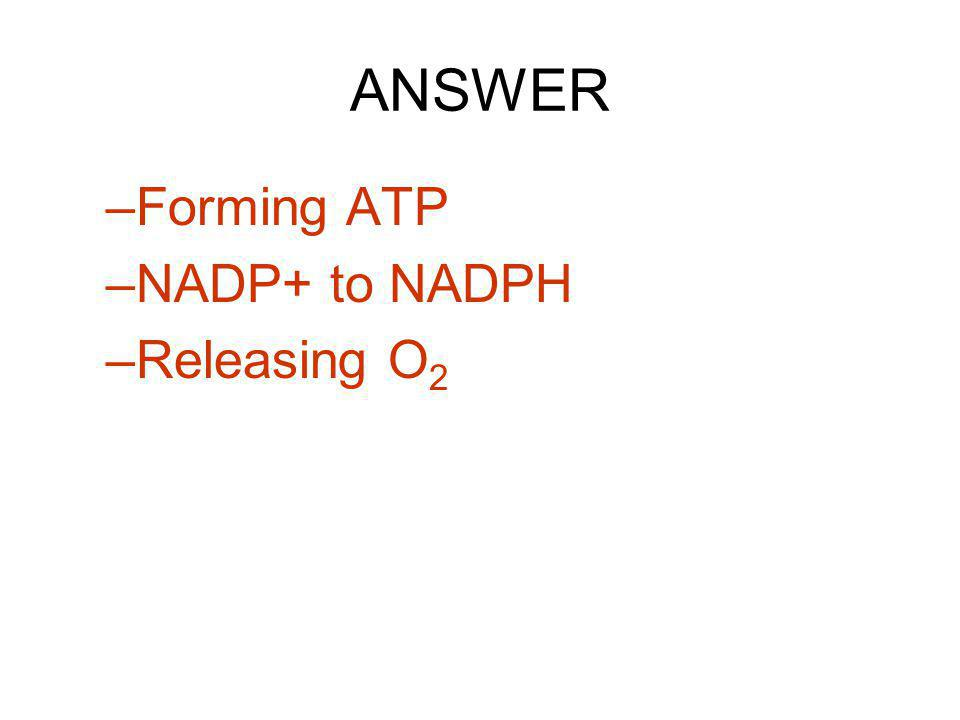 ANSWER Forming ATP NADP+ to NADPH Releasing O2