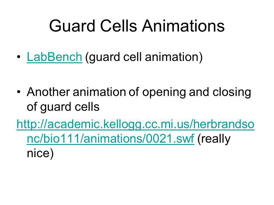 Guard Cells Animations