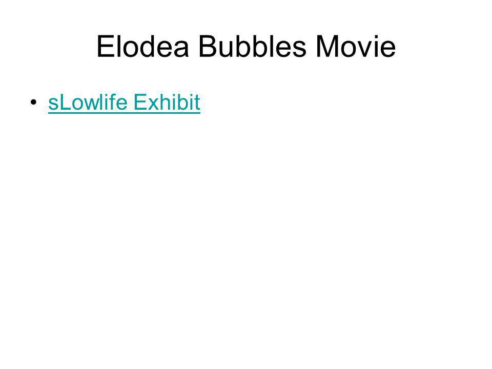 Elodea Bubbles Movie sLowlife Exhibit