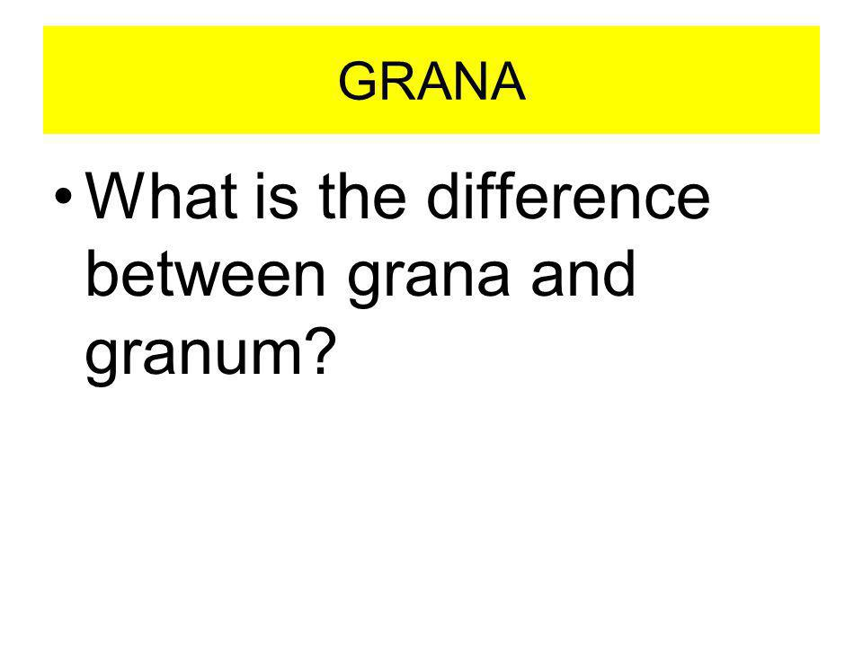 What is the difference between grana and granum