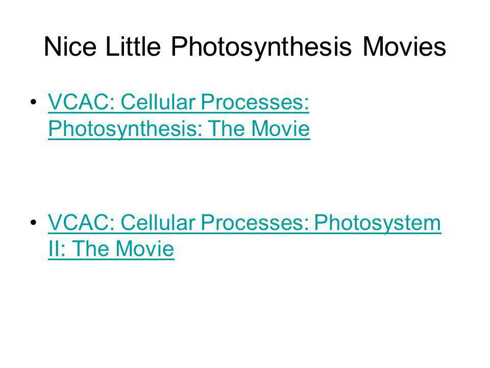 Nice Little Photosynthesis Movies