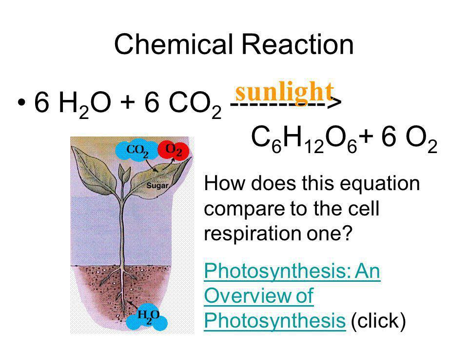6 H2O + 6 CO2 ----------> C6H12O6+ 6 O2
