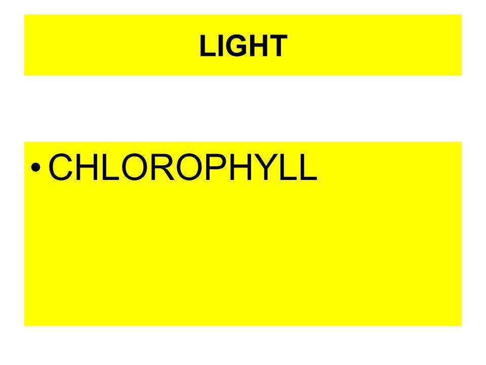 LIGHT CHLOROPHYLL