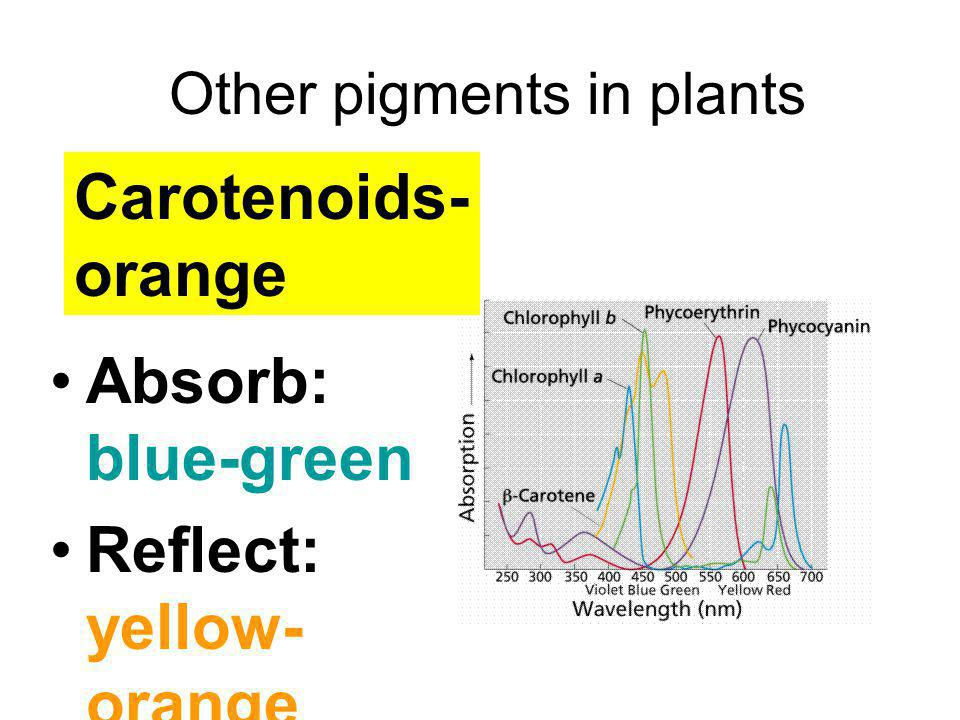 Other pigments in plants
