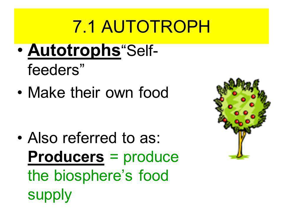 Autotrophs Self-feeders