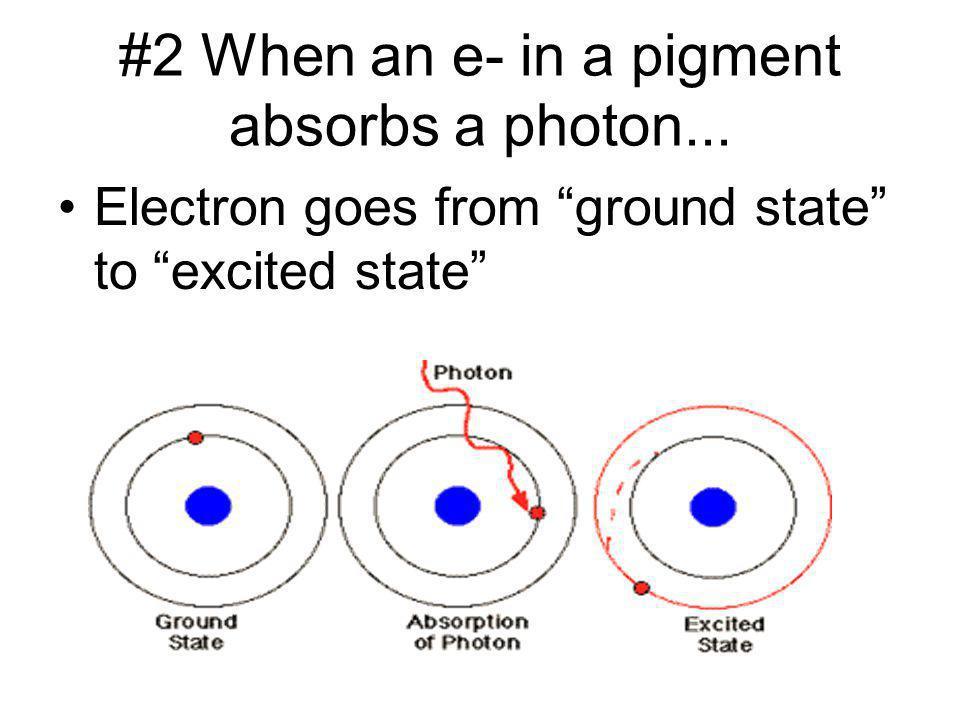 #2 When an e- in a pigment absorbs a photon...