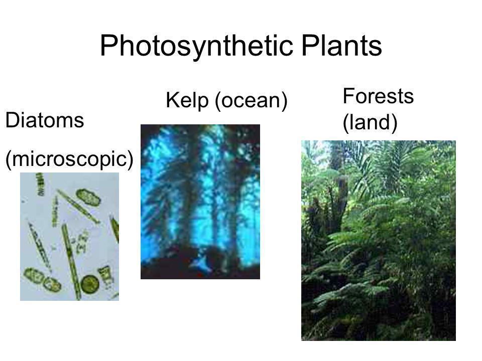 Photosynthetic Plants