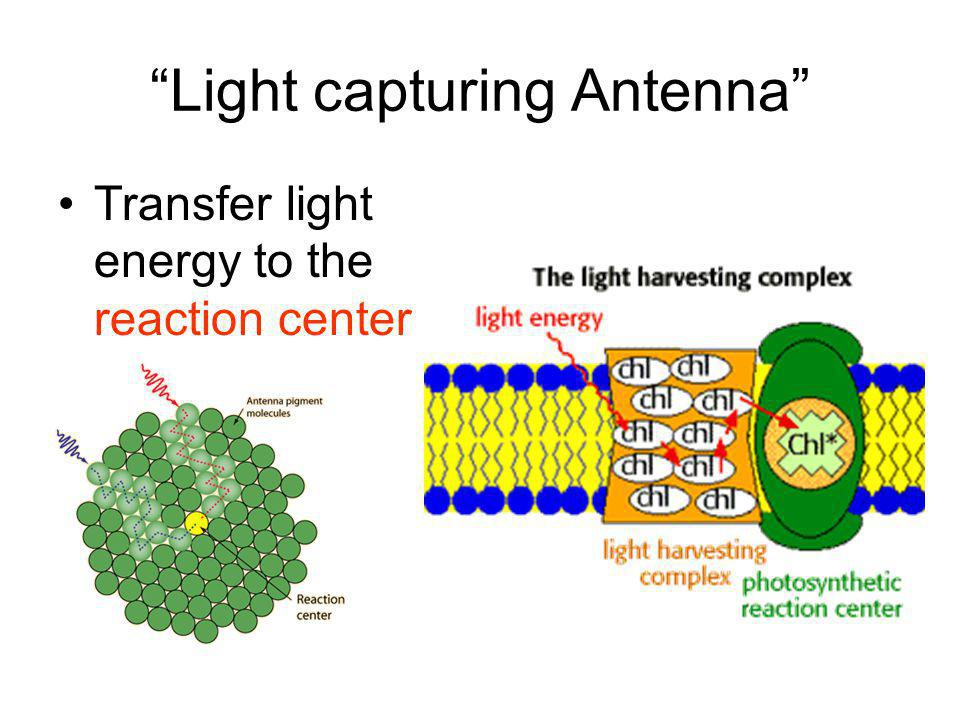 Light capturing Antenna