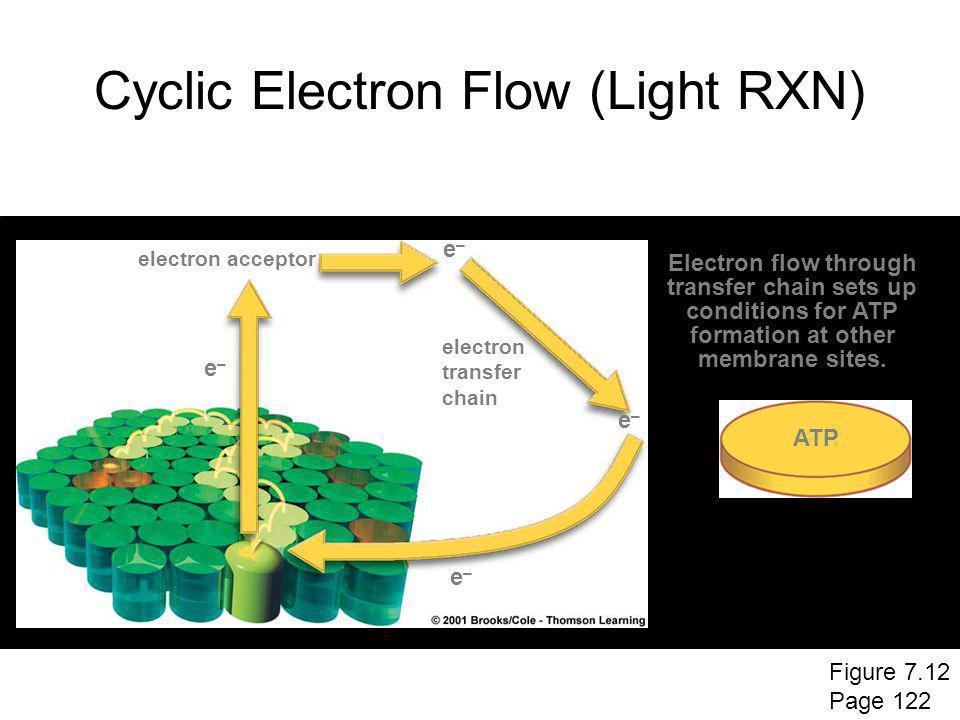 Cyclic Electron Flow (Light RXN)