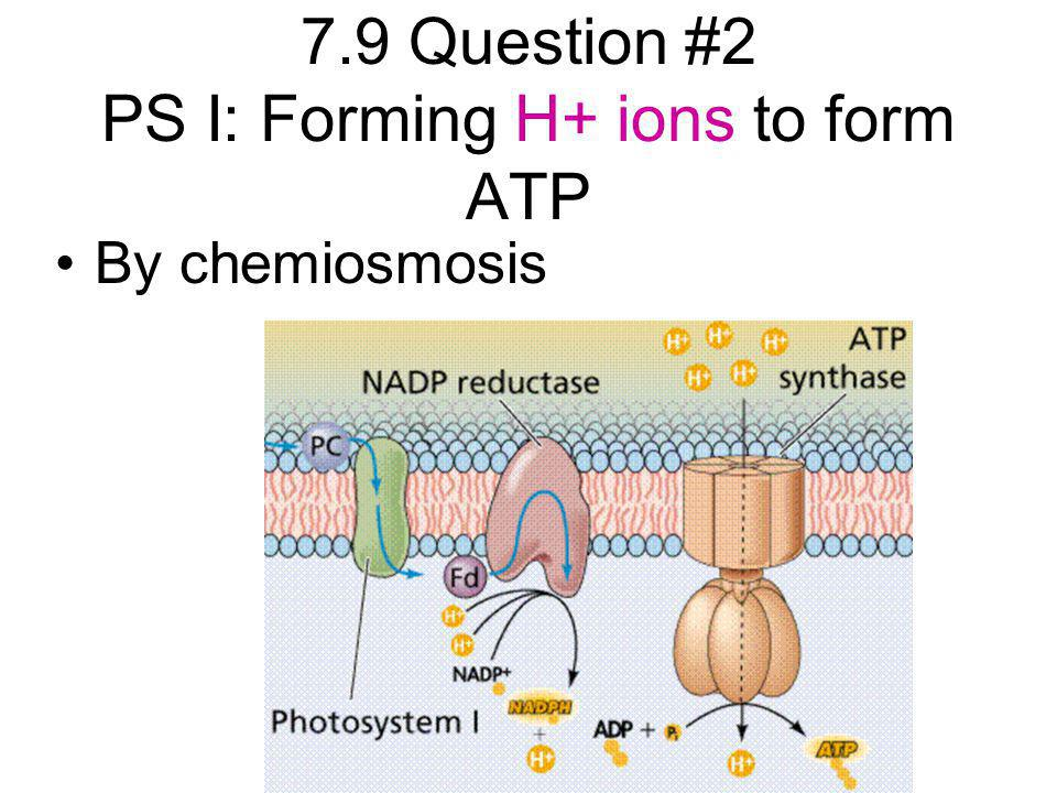 7.9 Question #2 PS I: Forming H+ ions to form ATP