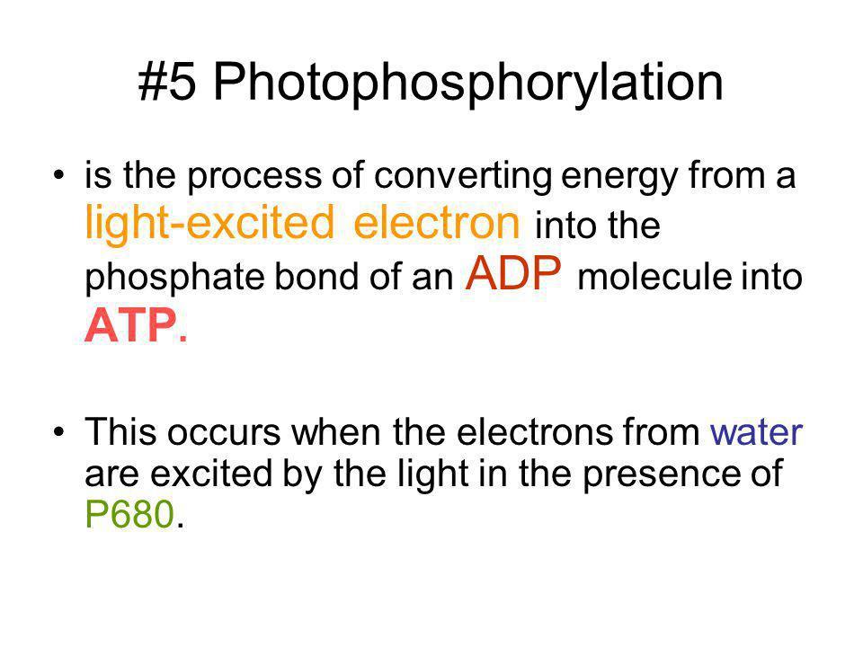 #5 Photophosphorylation