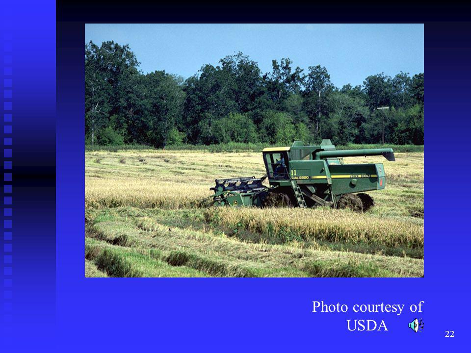 Rice production in the United States is primarily in eastern Arkansas, the coastal regions of Texas and in california