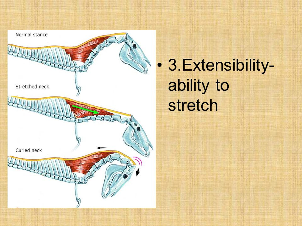 3.Extensibility-ability to stretch