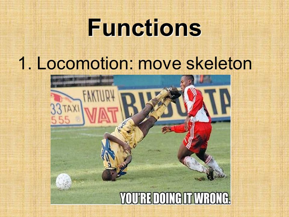 Functions Locomotion: move skeleton