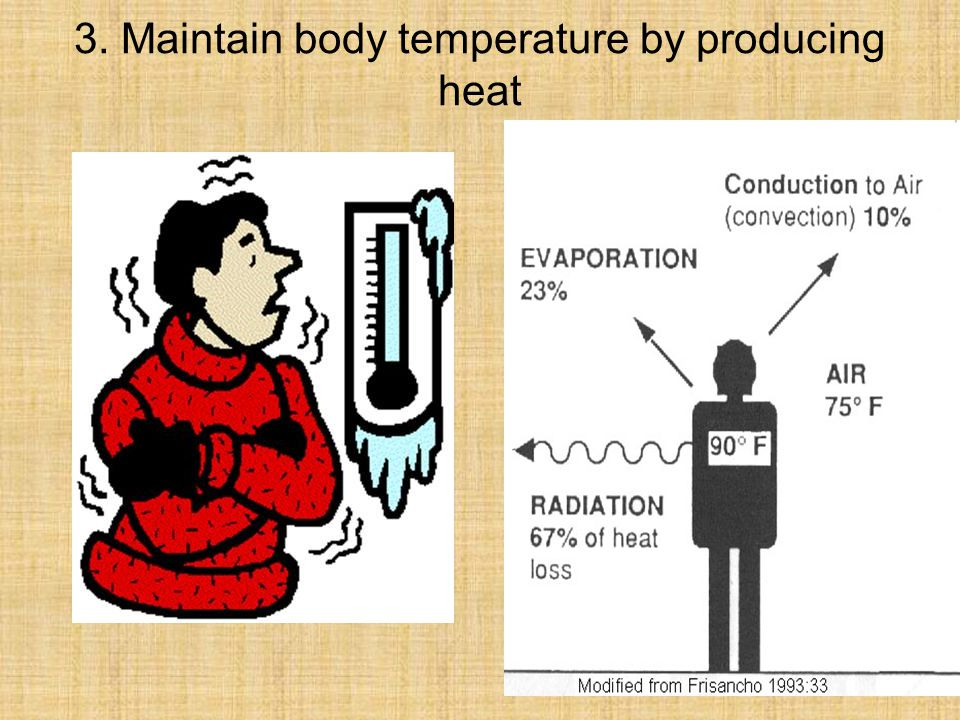 3. Maintain body temperature by producing heat