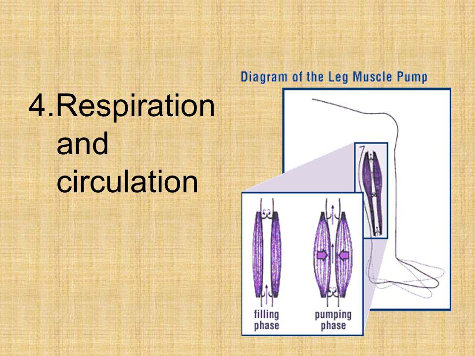 4.Respiration and circulation