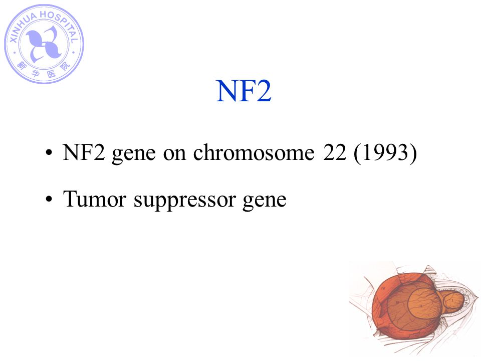 NF2 NF2 gene on chromosome 22 (1993) Tumor suppressor gene