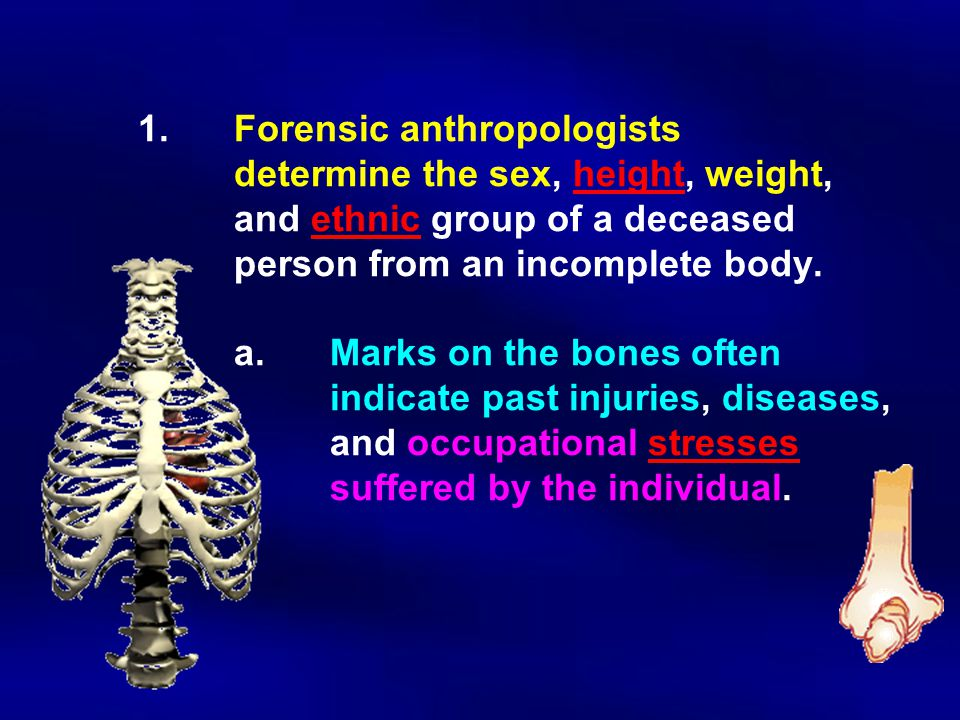 1. Forensic anthropologists. determine the sex, height, weight,
