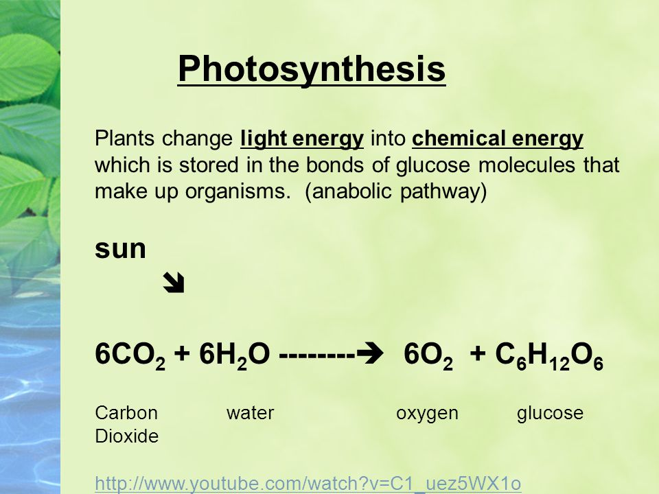 Photosynthesis sun  6CO2 + 6H2O  6O2 + C6H12O6