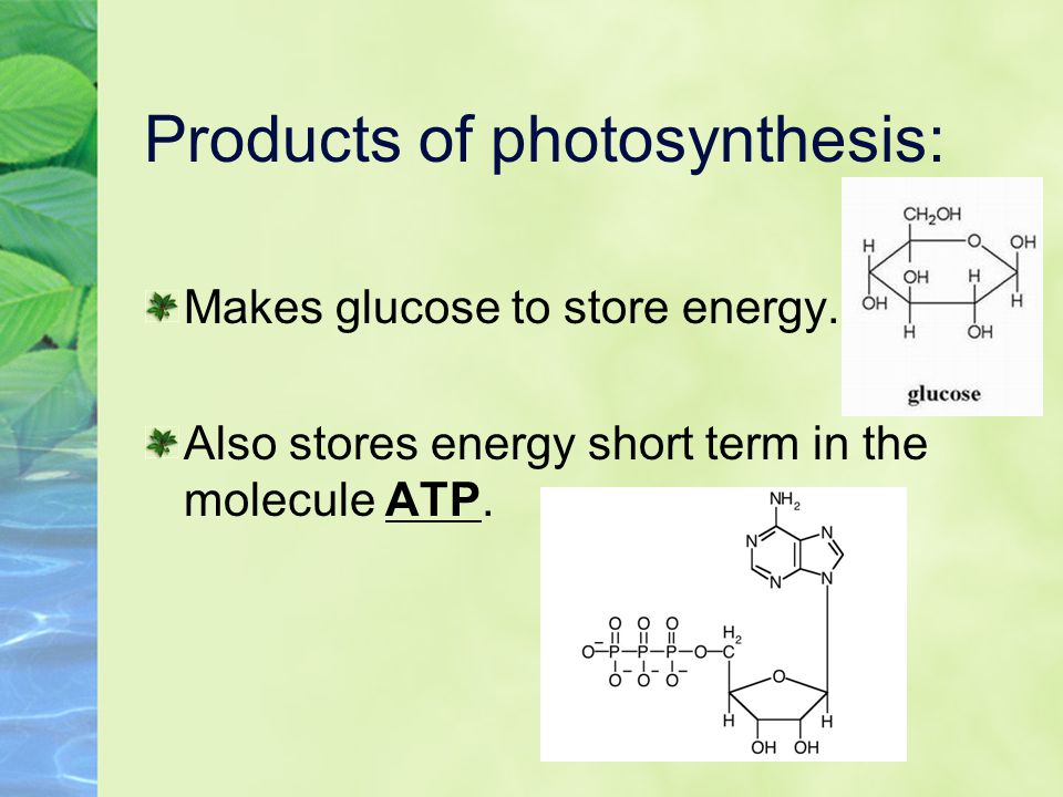 Products of photosynthesis: