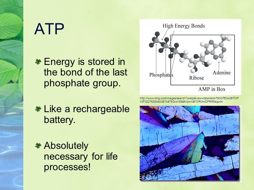 ATP Energy is stored in the bond of the last phosphate group.