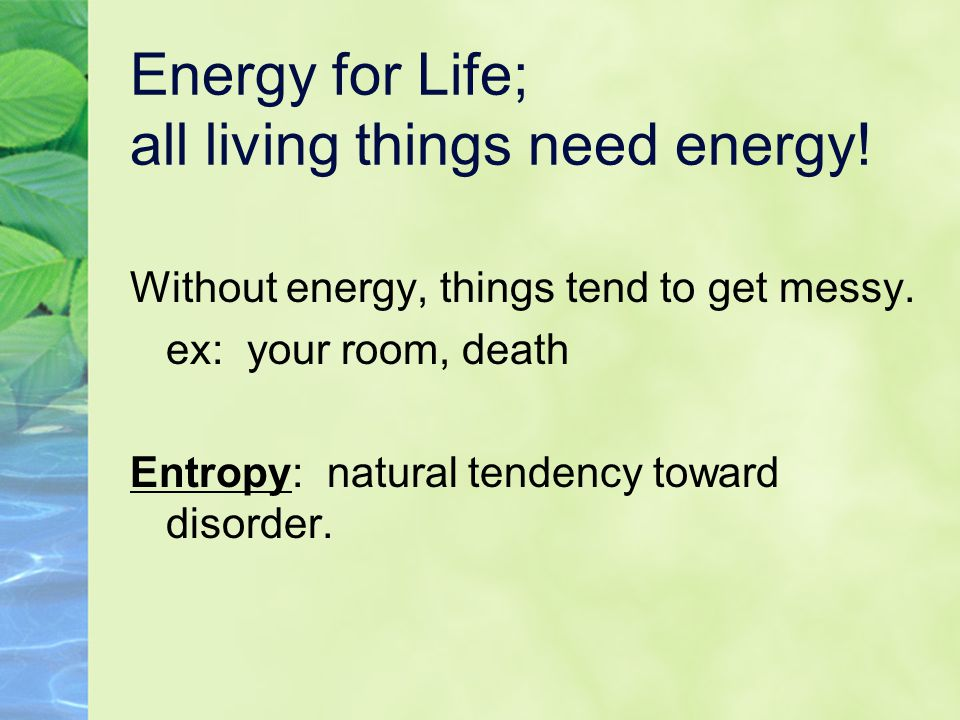 Energy for Life; all living things need energy!