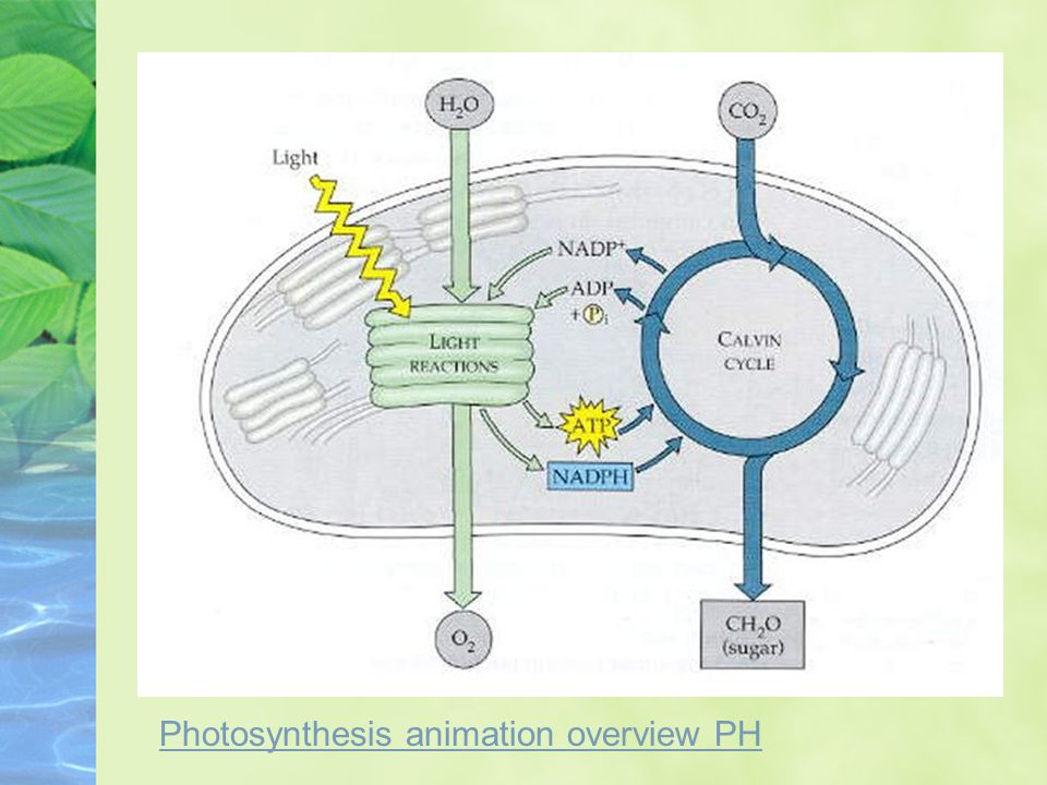 Photosynthesis animation overview PH