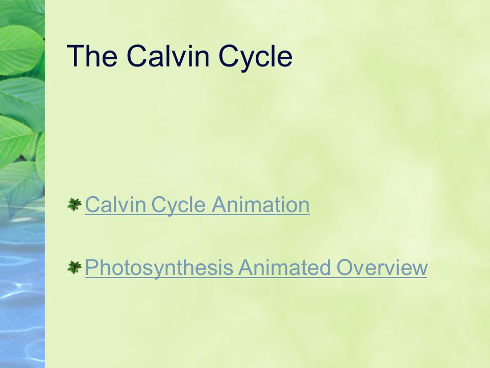 The Calvin Cycle Calvin Cycle Animation