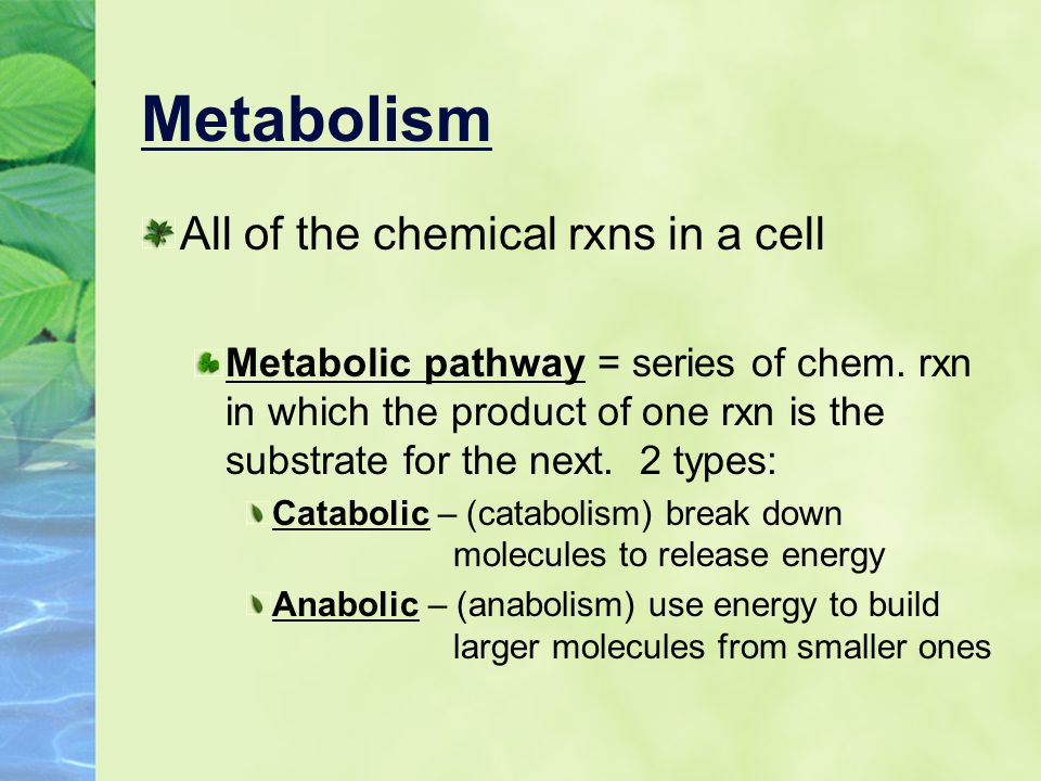 Metabolism All of the chemical rxns in a cell
