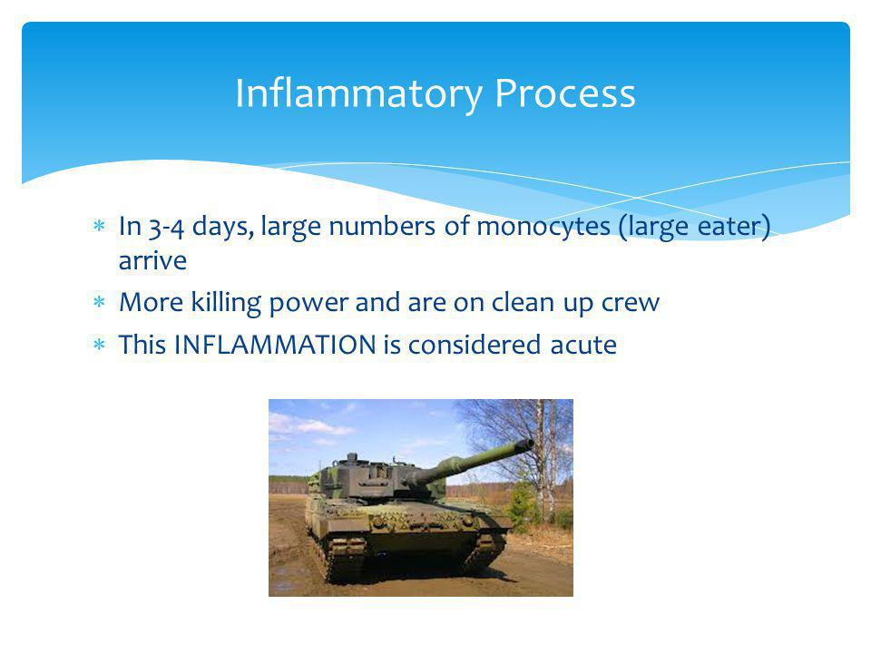 Inflammatory Process In 3-4 days, large numbers of monocytes (large eater) arrive. More killing power and are on clean up crew.