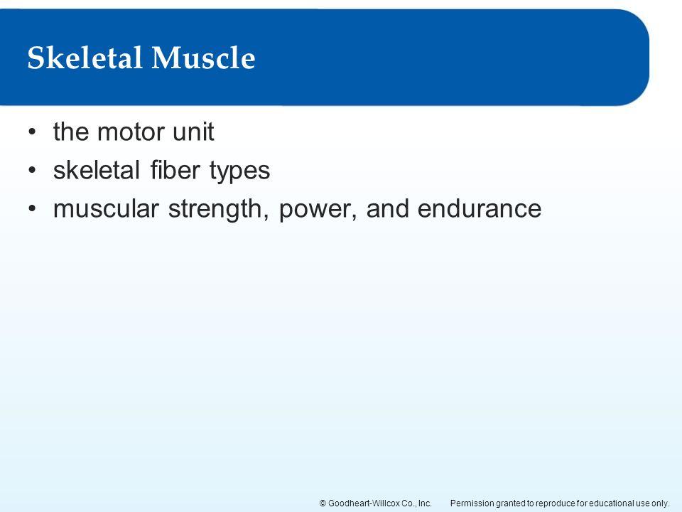 Skeletal Muscle the motor unit skeletal fiber types