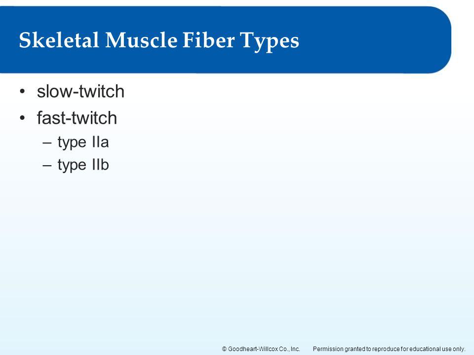 Skeletal Muscle Fiber Types