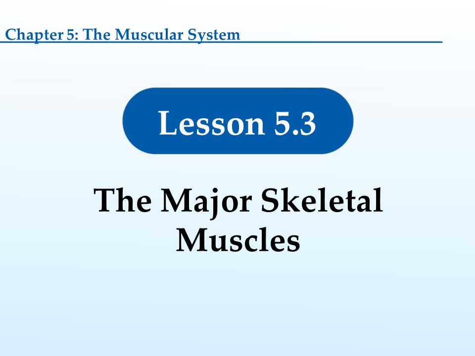 The Major Skeletal Muscles
