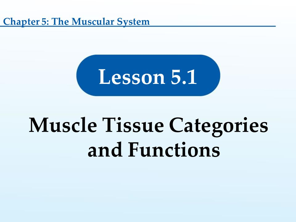 Muscle Tissue Categories and Functions