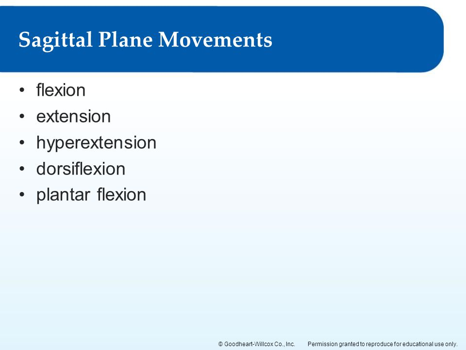 Sagittal Plane Movements