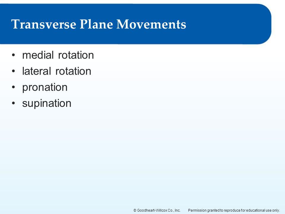 Transverse Plane Movements