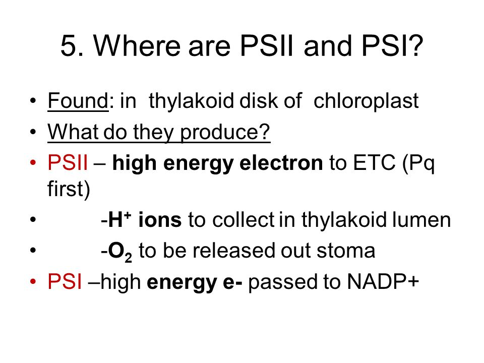 5. Where are PSII and PSI Found: in thylakoid disk of chloroplast
